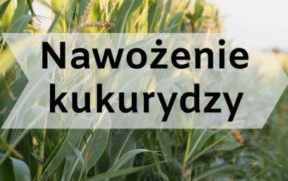 Nawożenie kukurydzy.