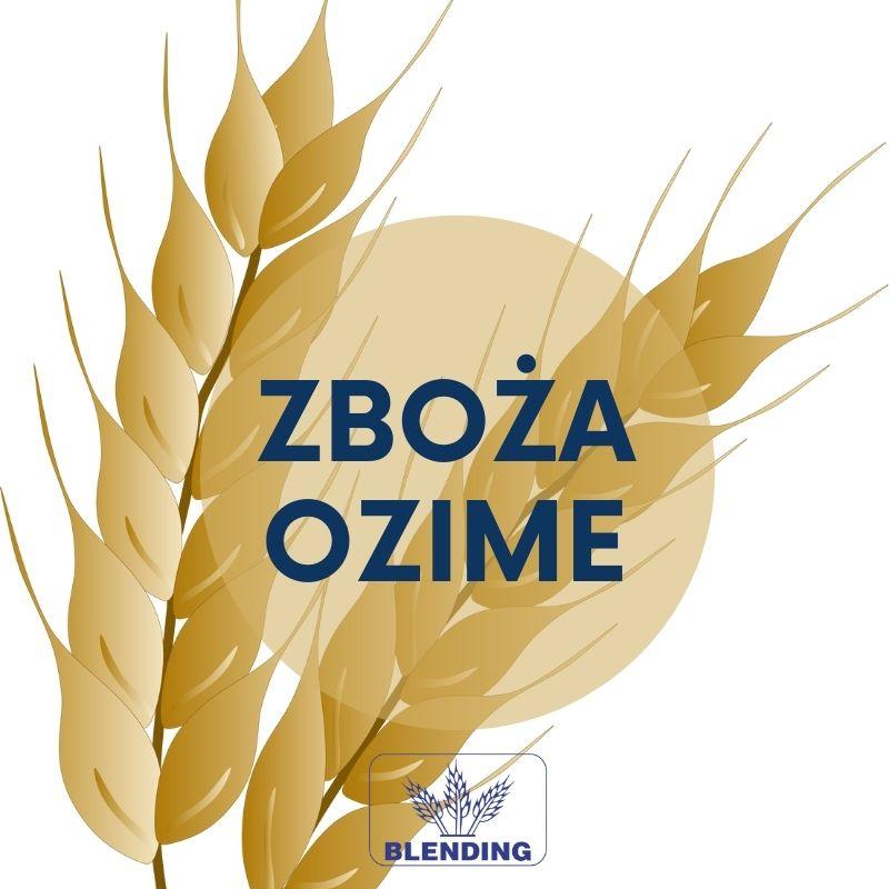 Materiał siewny zbóż ozimych