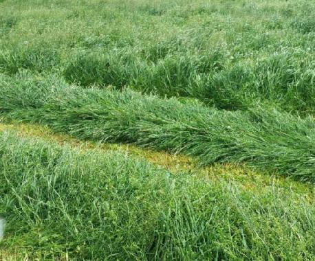 Nawożenie łąk i pastwisk