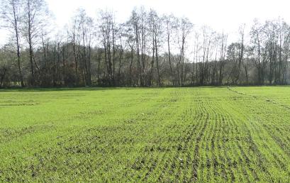 Nawożenie przedsiewne zbóż ozimych