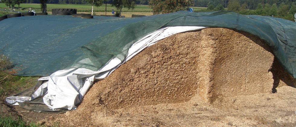 Kiszonka z kukurydzy – dobra jakość to podstawa