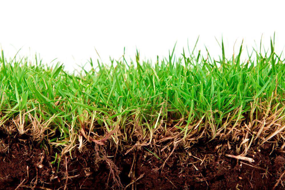 Nawożenie użytków zielonych