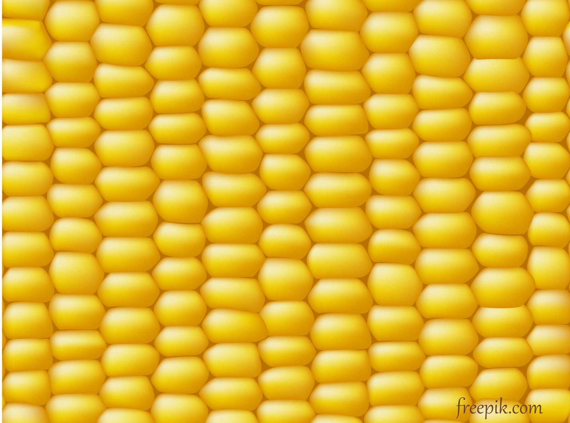 Kukurydza – dokarmianie dolistne