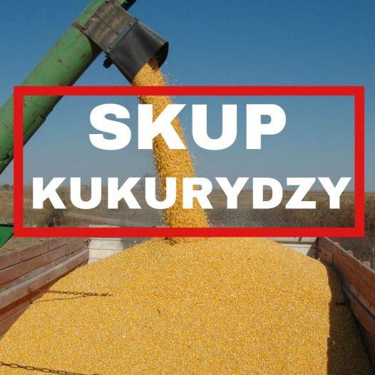Skup kukurydzy mokrej