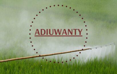 Adiuwanty