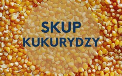 Skup kukurydzy